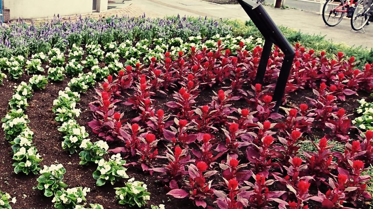 2019年夏、日野市商工会女性部による花壇の植え替え
