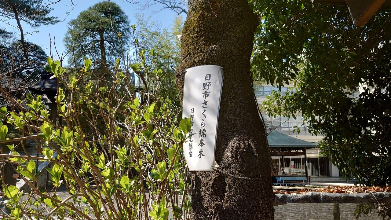 高幡不動尊にある「日野市さくら標本木」