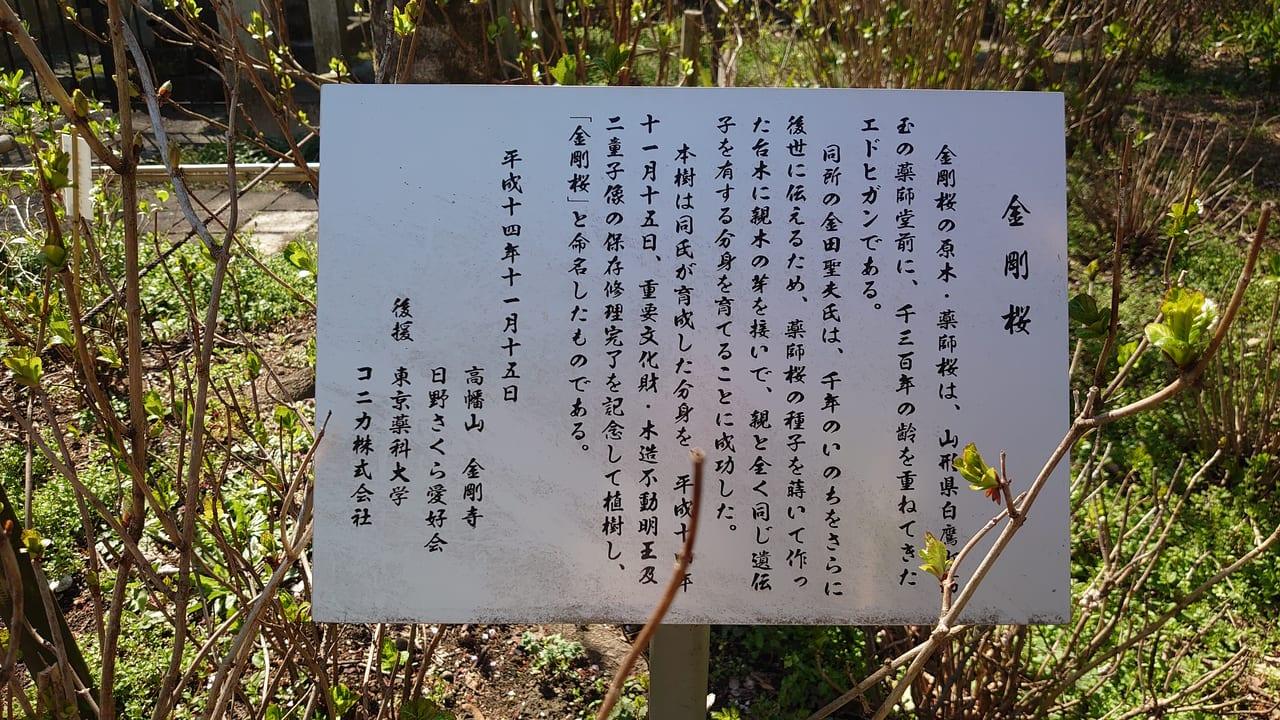 高幡不動尊の金剛桜