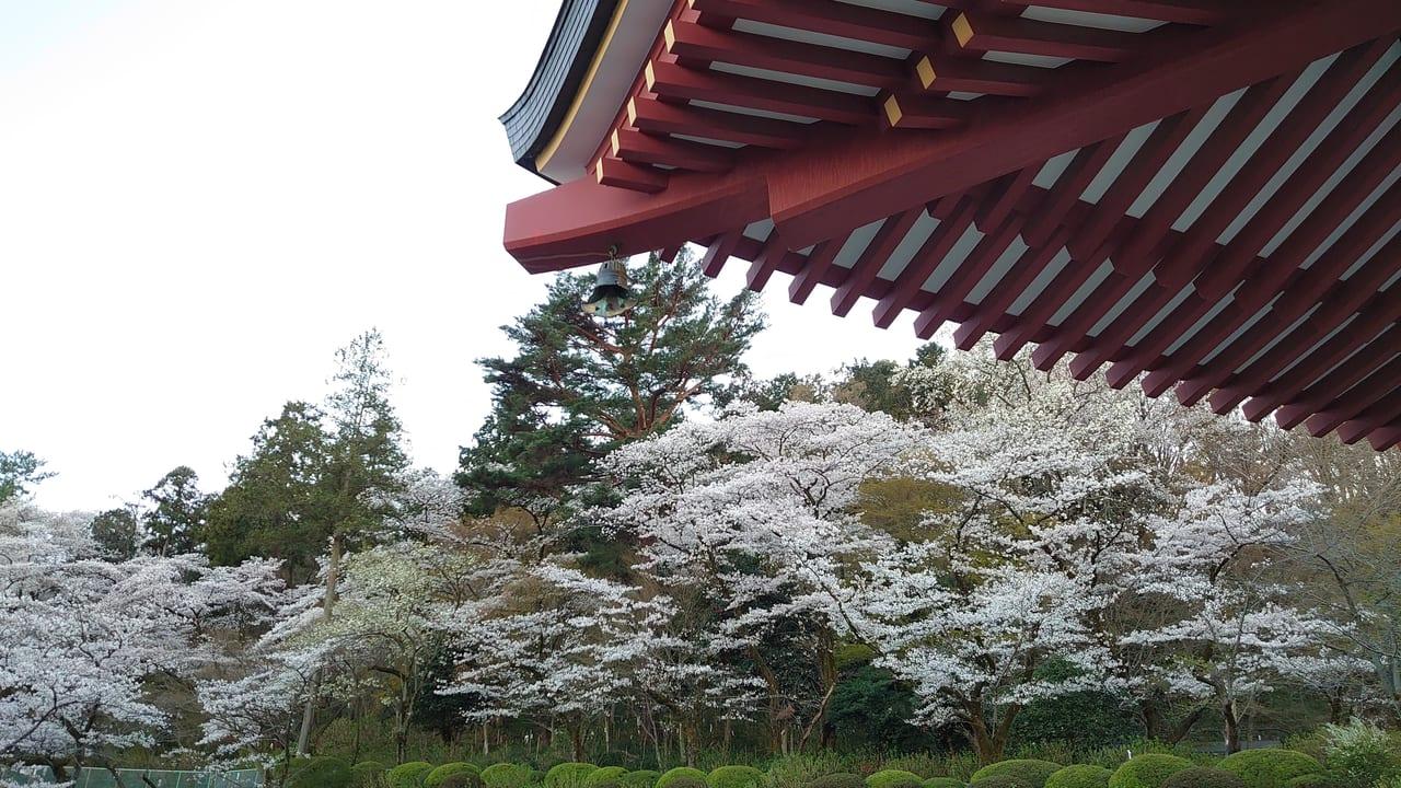 2020年3月25日 高幡不動の桜